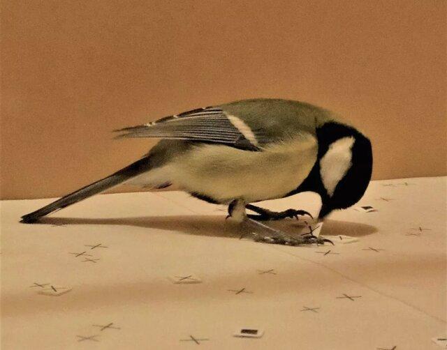 آموزش غذا خوردن به پرندگان با یاری فیلم!