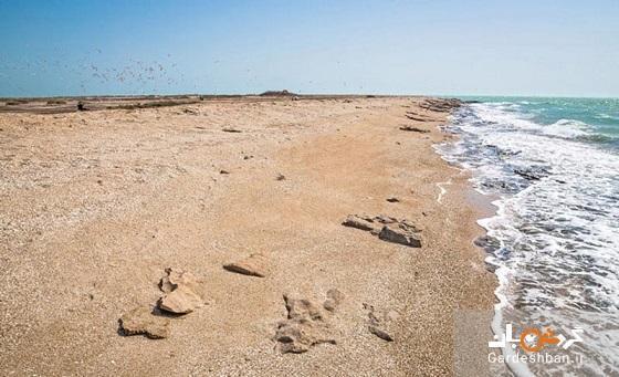 جزیره شیخ کرامه؛جزیره خالی از سکنه در سواحل بوشهر، عکس